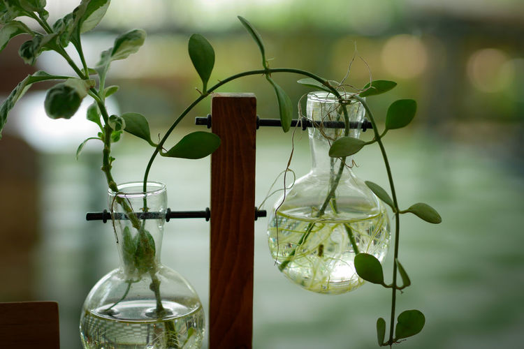 Close-up of plant in glass vase