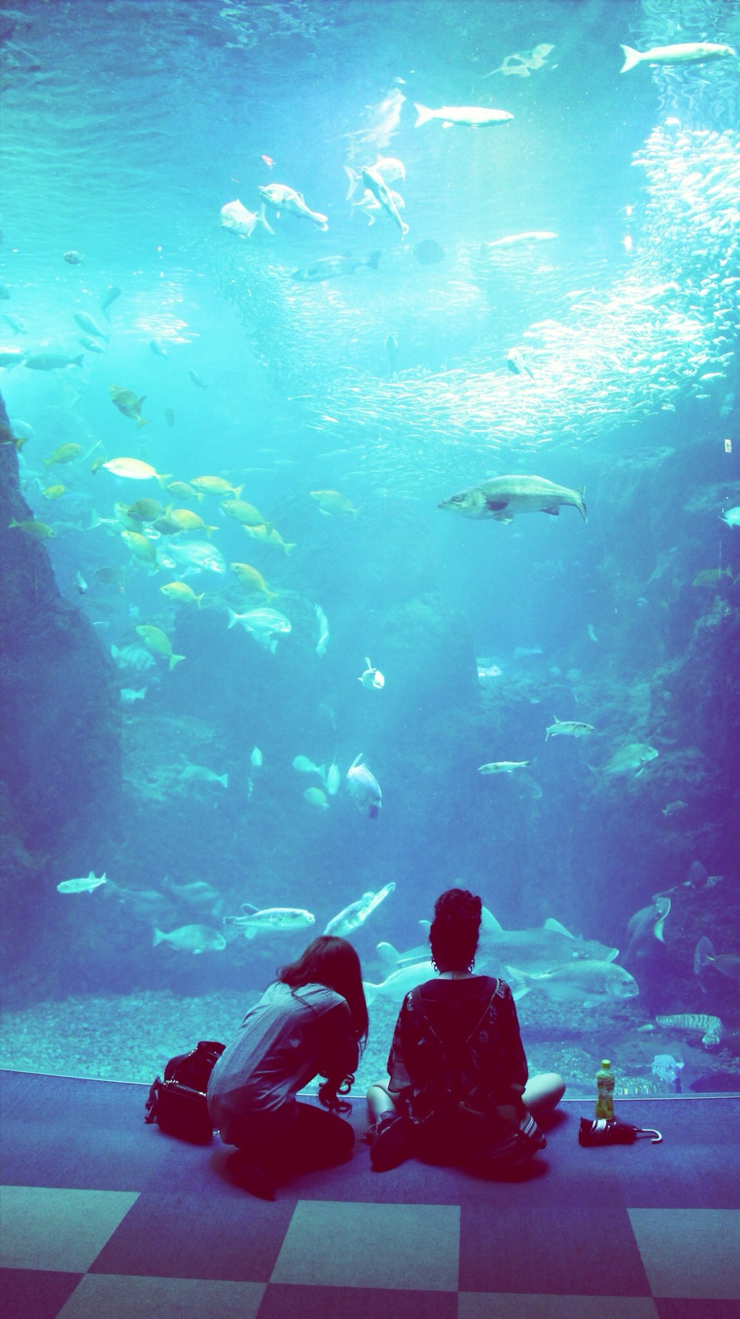 water, blue, sea, swimming, underwater, transparent, fish, indoors, sea life, animal themes, wildlife, nature, high angle view, undersea, beauty in nature, glass - material, animals in the wild, auto post production filter, day