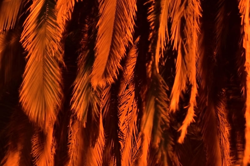 Full frame shot of palm leaves at night