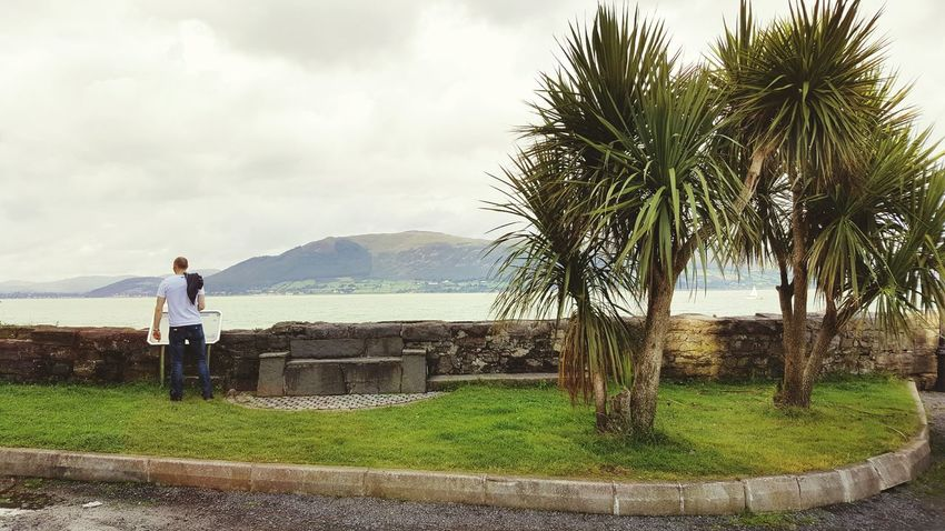 Water Palm Trees Nothern Ireland