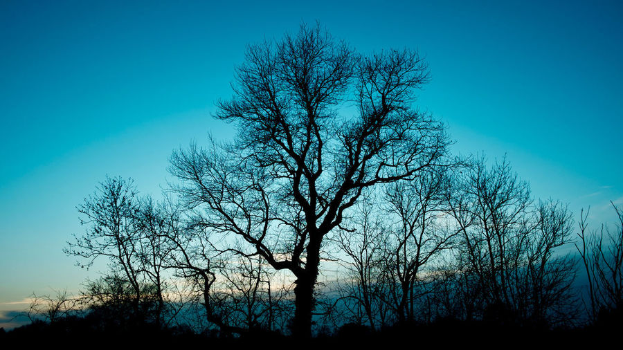 Low angle view of silhouette bare trees against clear blue sky