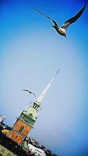 Captured these beautiful birds this summer, flying to.... Flying Birds Urban Birds EyeEm Best Shots Photooftheday