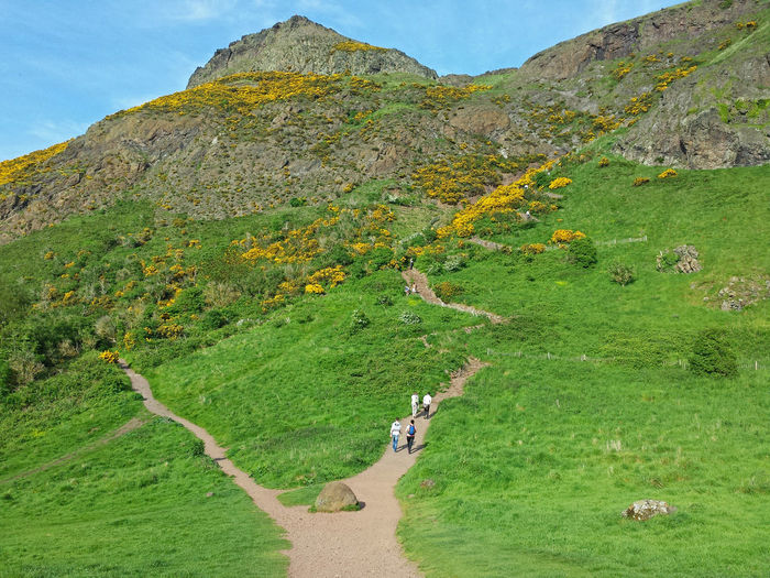 Two Paths to the Summit. Memories fron hiking up Arthurs Seat on a Spring afternoon. Edinburgh , Scotland May 2014. Hiking Adventures Hiking Trail Hiking Urban Green Midlothian Arthur's Seat Small Mountain Hill Lush Landscape Scottish Landscape Travel Visit Scotland Two Paths Choices Life Path Decisions Recreation  Microadventure Spring Summer Summer In Scotland