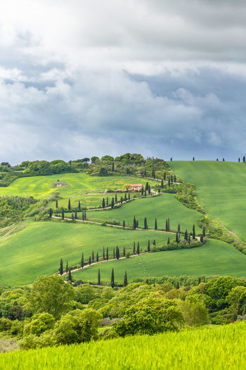 Winding road on a hill in Italy Country Country Road Farmland View Aerial View Agriculture Beauty In Nature Cloud - Sky Curvy Cypress Trees  Field Hill Hillside Italy Landscape Nature No People Rural Scene Scenics Sky Travel Destinations Tree Valley Viewpoint Winding Road