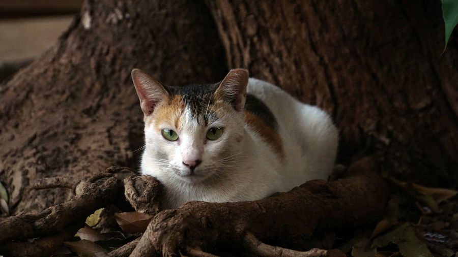 Animal Head  Focus On Foreground Whisker No People Close-up Vertebrate Domestic Animals Pets Domestic Feline Domestic Cat Animal Themes Animal One Animal Cat Mammal Cat Staring Cat Beneath The Tree