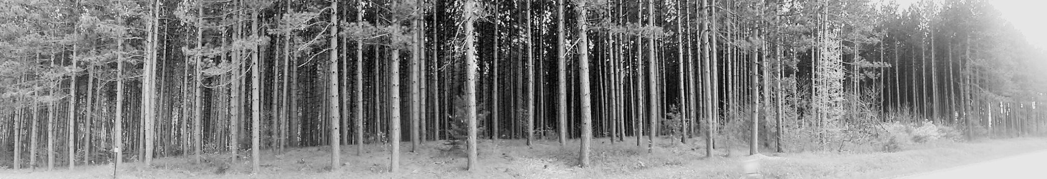 Black And White Forest Taking Photos