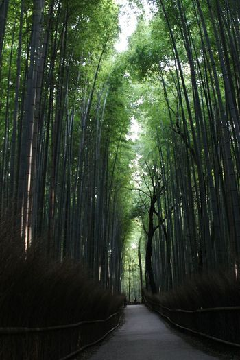 Japan Giappone Japanese  Zen Giapponese Bamboo Forest Trees Nature Natura Travel Travel Photography Viaggio Viaggiare Happyness Freedom Green Verde Arashiyama Kyoto