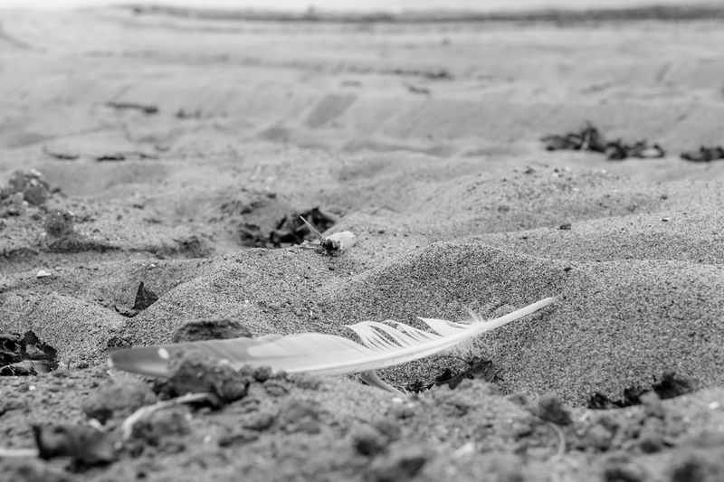 Close-up of feather on beach