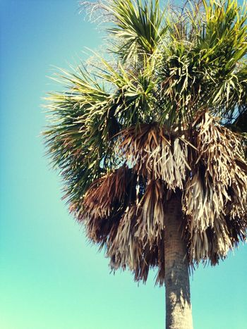 Beach Trees Blue Simplicity