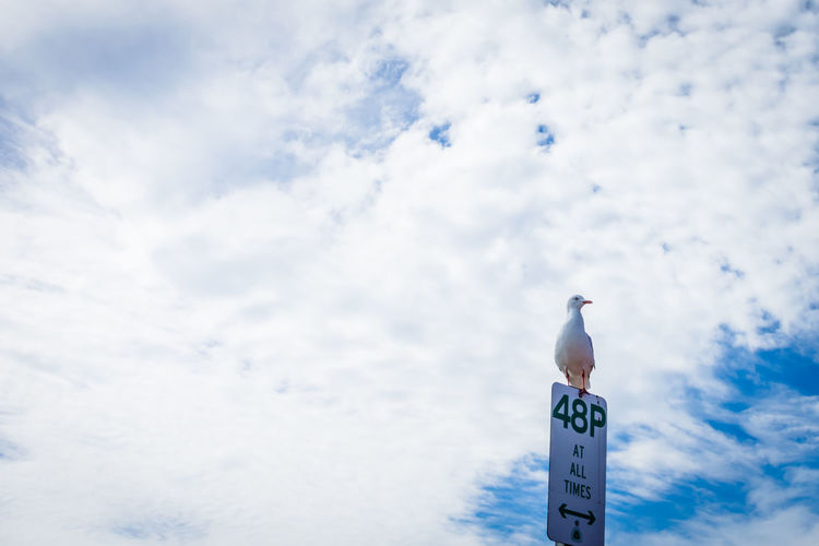 Animal Animal Themes Animal Wildlife Animals In The Wild Beauty In Nature Bird Cloud - Sky Clouds Communication Day Low Angle View Nature No People One Animal Outdoors Perching Seagull Sign Sky Tranquility Vertebrate