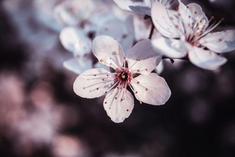 🐒📷🌼 Blur