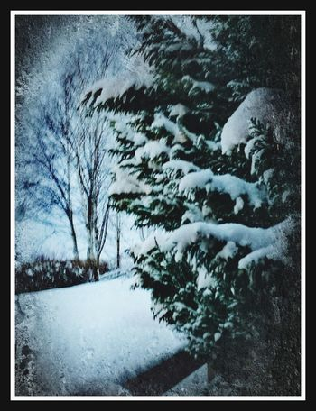 Snow Winter Cold Temperature Weather Nature Frozen Tranquility Snowing Outdoors Beauty In Nature No People Tree