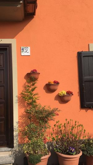 Potted Plant Plant Architecture Wall - Building Feature Orange Color House Wall