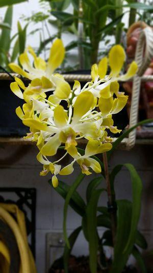 Flowers Orchidee. ?