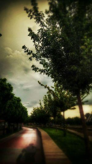 Ağaçlar Hello World