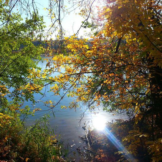 Fall Beauty Fall Season Nature Photography EyeEm Best Shots - Autumn / Fall South Saskatchewan River Fall Colors Autumn Colors Autumn Collection Autumn 2015 Autumn Trees