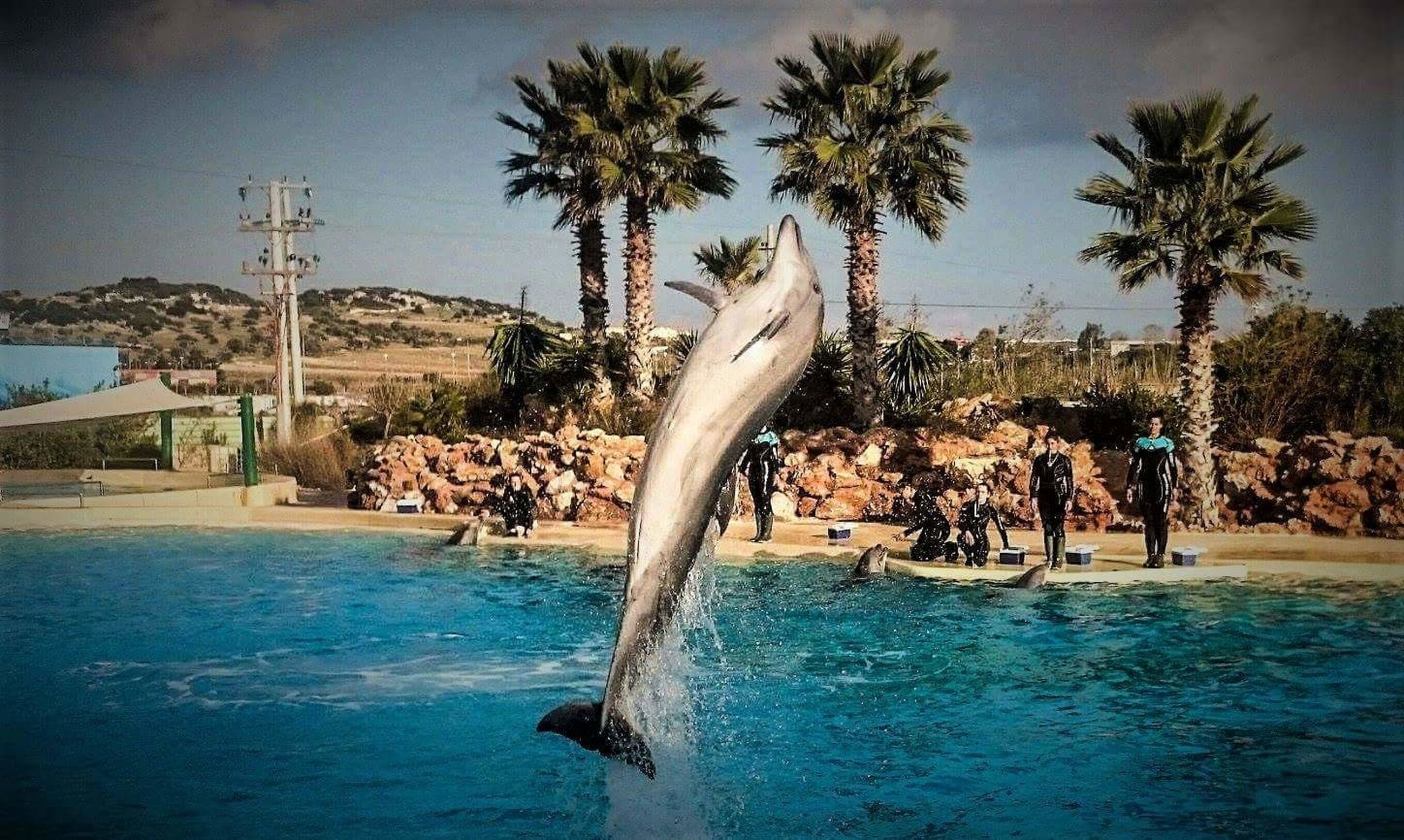 palm tree, tree, swimming pool, water, real people, day, outdoors, sky, water park, nature, blue, vacations, beauty in nature, swimming