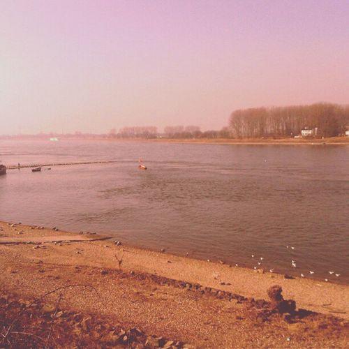 Germany Rhein View Monhein