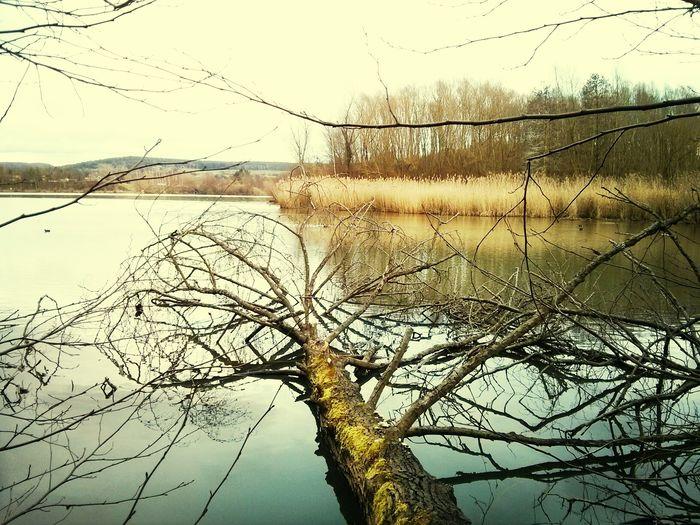 fallen TreePorn at a wonderful Lake