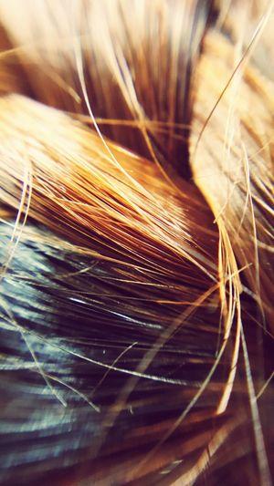 Hair Braid Hair Brown Brown Hair Hair Braid Hairstyle Girl Treaditional