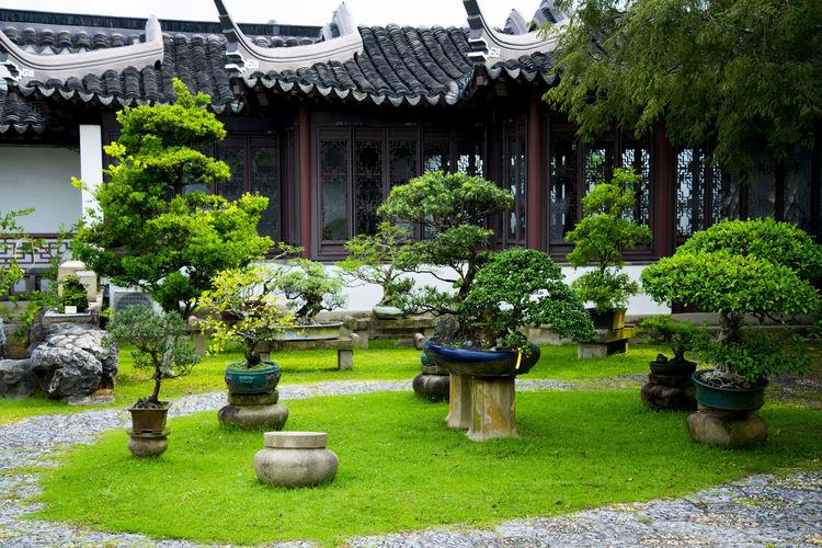 Bonsai Garden Singapore City Bonsai Garden Bonsai Tree Chinese Garden Japanese Garden