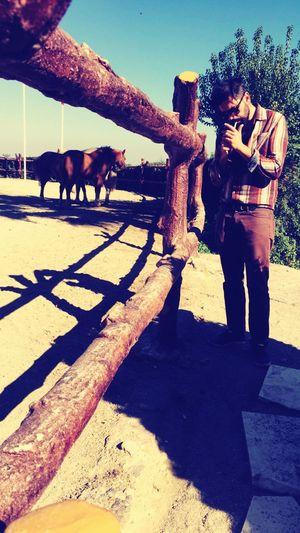 That's Me Horse Smoke Enjoying Life Natural Horse Riding Brown Shadow
