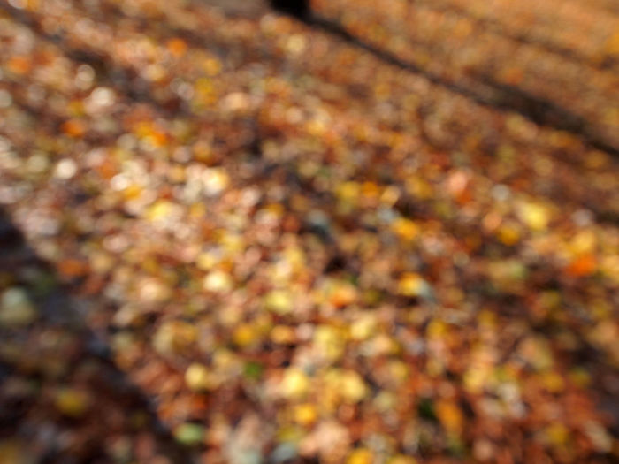 Autumn Backgrounds Berlin Close-up Day Defocused Fine Art Photography Full Frame Leaf Leafs Nature No People Outdoors Textured  Wolskartin