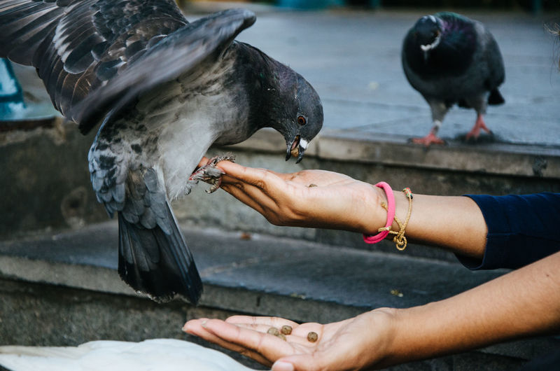 A smiling woman feeding a pigeon from her hand in the park Beautiful Care Fly Freedom Fun Happy Life Love Nature Woman Animal Arm Background Bird Day Dove Eat Feed  Female Food Hand Human Outdoor Pigeon Wings