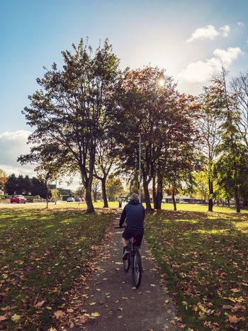 Leaves Fall Autumn Sky Bicycle Plant Tree Transportation Real People Nature One Person Riding The Way Forward Rear View Cycling