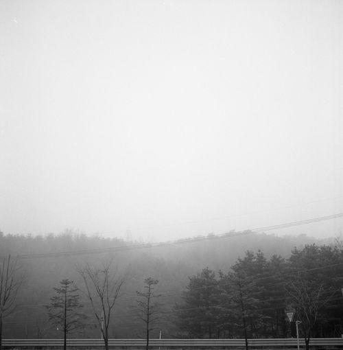Ready! Self Develop Film Photography Black And White Snapshot Bnw_life Filmisnotdead Black & White Rolleiflex 6x6 Mx-evs