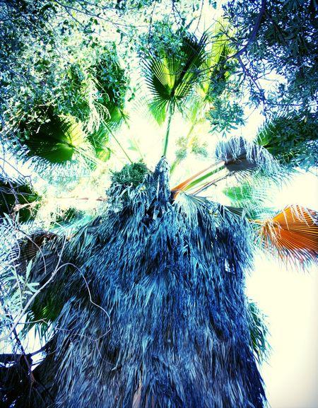 Palmtree Walking Around California Desert