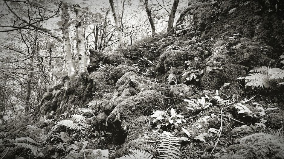 Fine Art Photography Cheddar Gorge WoodLand Black And White