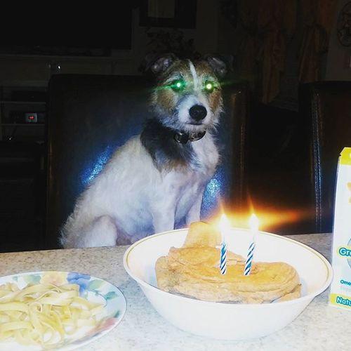 Happy birthday cyborg dog Jackrussell Cyborg Robotdog Jrt Remy
