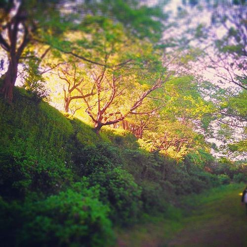 Trees ★ Trees Garden Green キラメキ Forest いやし Japan