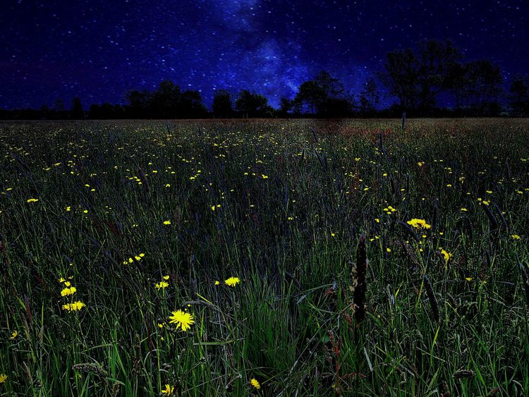 Sommernachtstraum Mild Summer Night Summer Meadows  Darkness And Light Silhouettesagainst The Starry Skies Nocturnal Flower Meadows Bright Night Magical Nights Dreamscape Fantasy Edits The Essence Of Summer Overnight Success