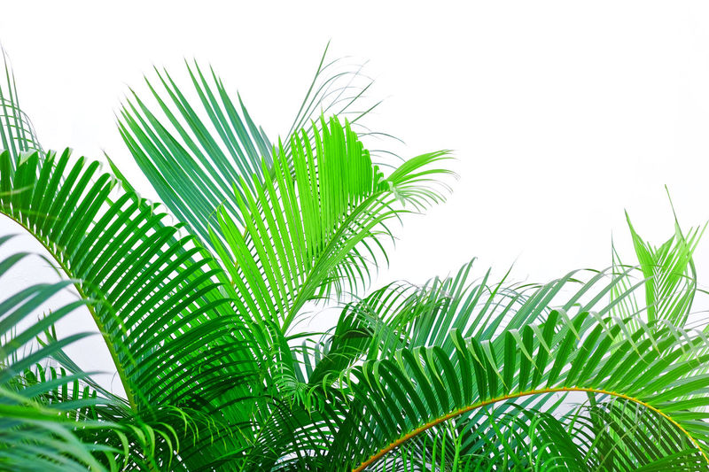 Low angle view of palm tree leaves against sky