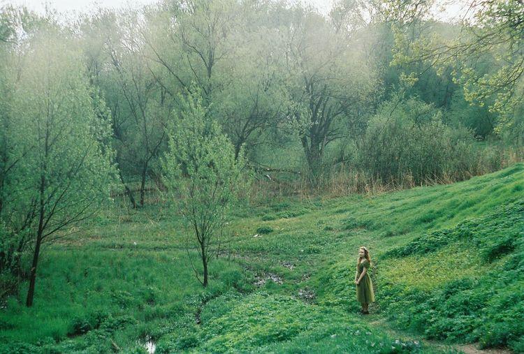 Tree Plant One