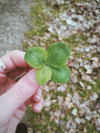 Lucky 🍀 Leafclover Photography Photo Outdoors Luck Lucky Huaweiphotography HuaweiP9 Random Human Body Part One Person Human Finger Holding Real People Leaf