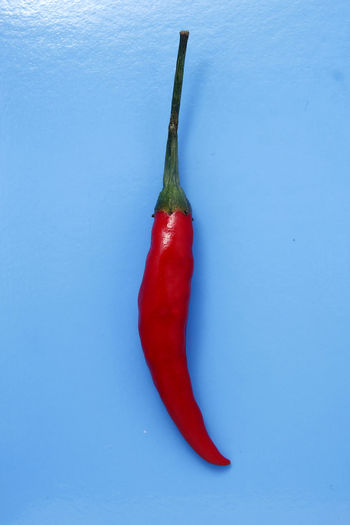 red chili pepper Chili  Chili Pepper Red Food Food And Drink Hot Spice Spices Spicy Spicy Food Ingredient Flavor Taste Red Studio Shot Red Bell Pepper Vegetable Colored Background Pepper - Vegetable Food And Drink Close-up Red Chili Pepper Pepper Ingredient Jalapeno Pepper Chili Pepper Bell Pepper Chili  Spice Raw Food