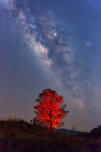Tree on field against sky at night