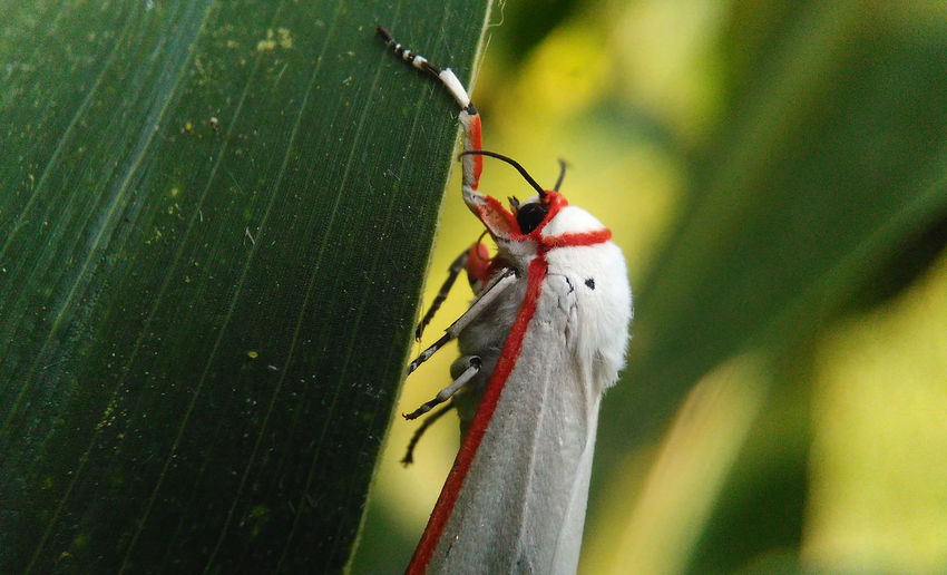 White Monster Animals In The Wild Macro Photography Strange Insect... Animal Animal Themes Animal Wildlife Animals In The Wild Close-up Day Fragility Green Color Insect Leaf Macro_collection Nature No People One Animal Outdoors Strange Insect White Animal White Monster