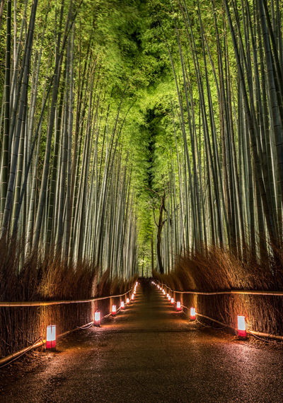Illuminated Empty Road Amidst Bamboo Grove