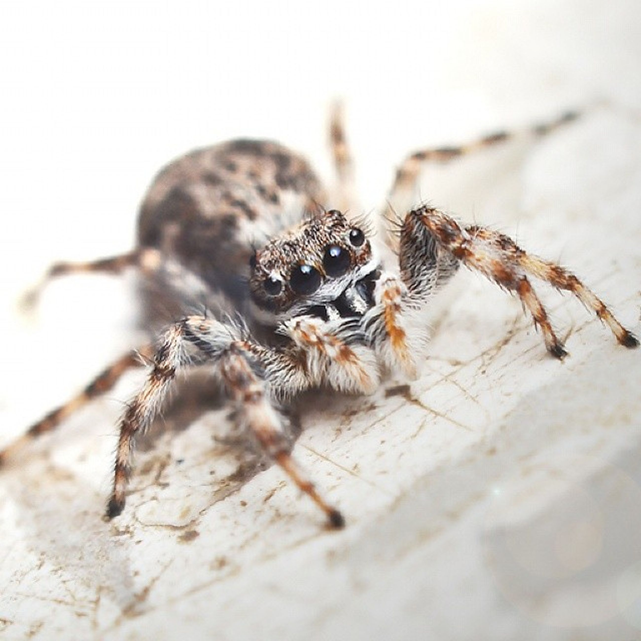 animal themes, animals in the wild, one animal, wildlife, insect, close-up, focus on foreground, selective focus, zoology, nature, full length, day, no people, outdoors, two animals, animal, spider, animal antenna, animal wildlife, wall - building feature