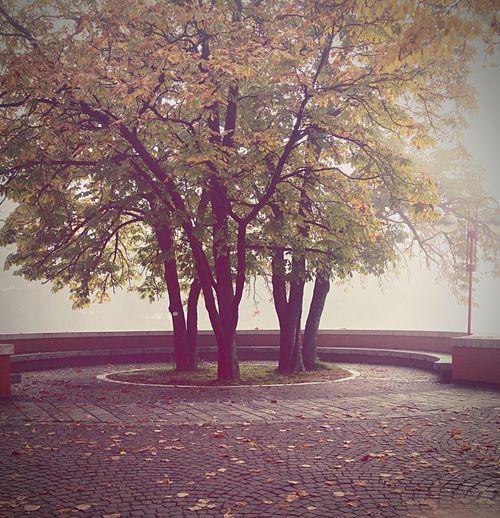My friendship tree First Eyeem Photo