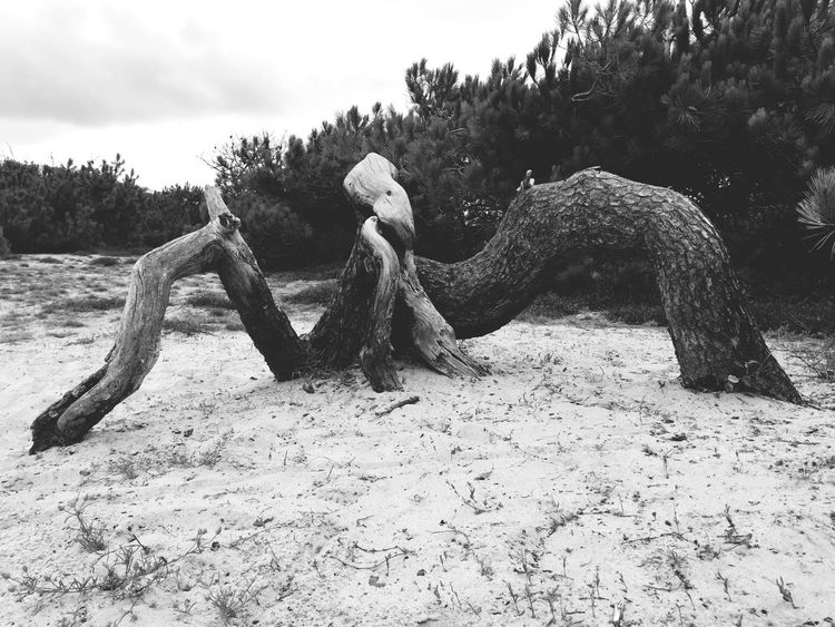 Tronc Plage 🌴 Plage Landes Nature Nature_collection Naturelovers Monster Monstre