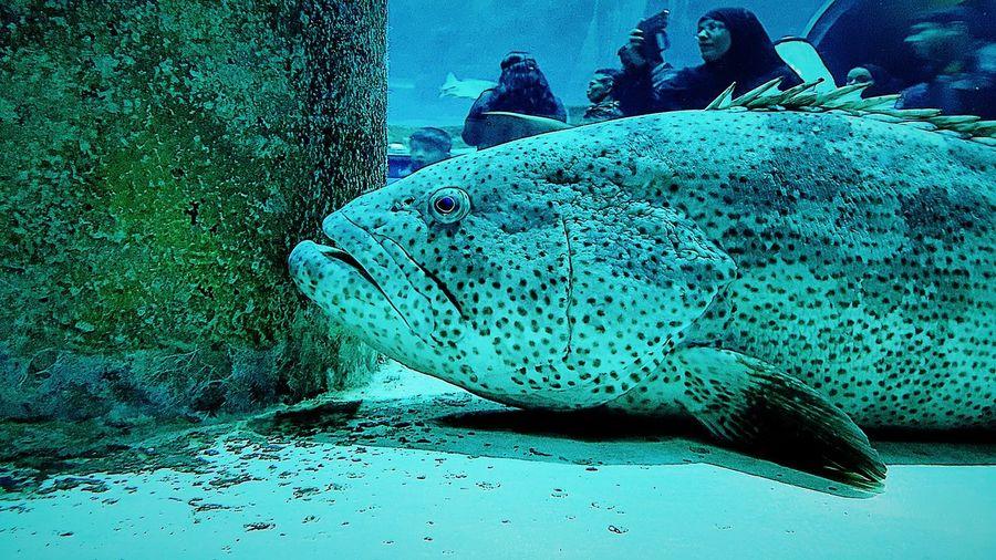 Sea City Life Outdoors Waterfront Beach Fish