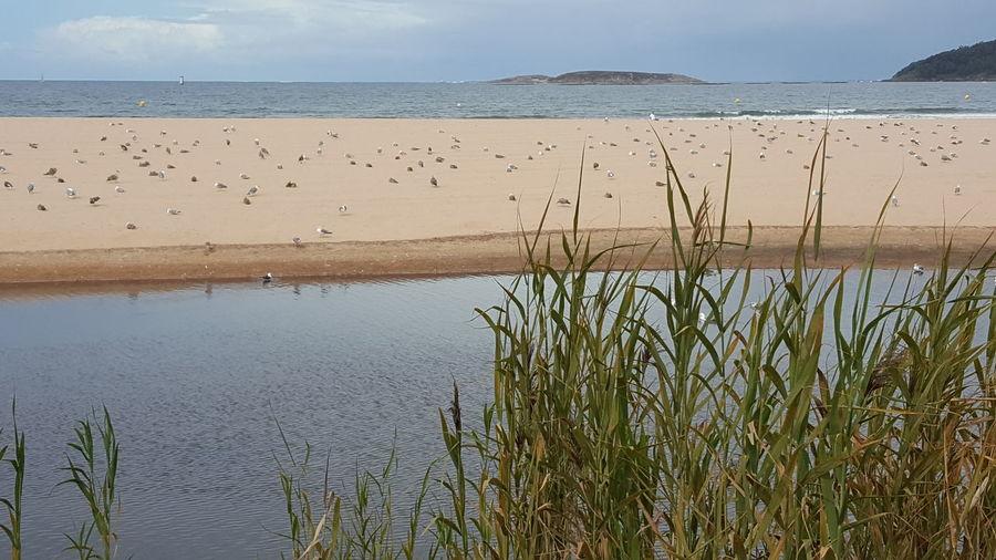 Tranquil Scene Nature Beach