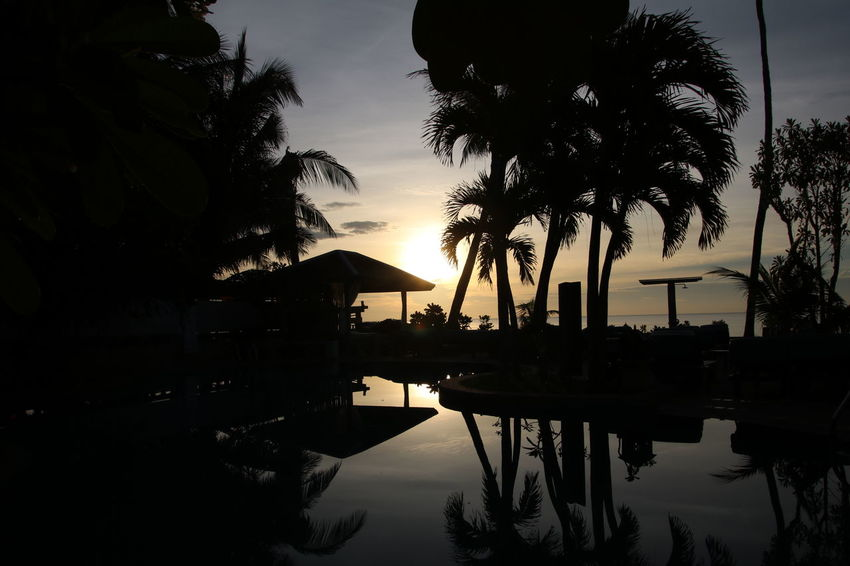 Tree Travel Sea Sky Cloud - Sky Sunrise Beach Outdoors Kosamui Water Pool Poolside Majik Hour Palm Tree