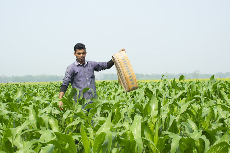 Young farmer holding water pipe in corn field to watering plants