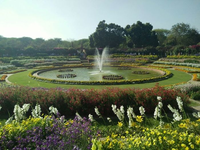 Freshness Beauty In Nature Mughal Garden Flowers, Nature And Beauty Flower Photography Presence